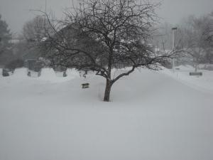 Blizzard Juno visits