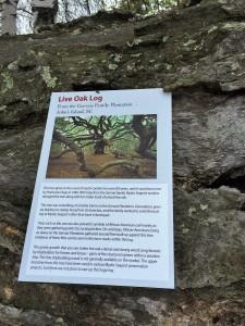 Live oak history